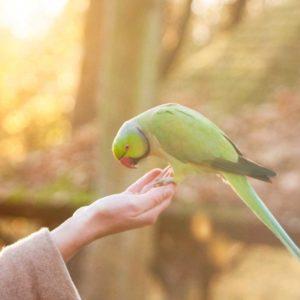 Birds - Your Pet Source